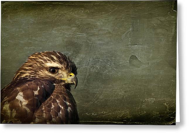 Osprey Florida Greeting Cards - Visions of Solitude Greeting Card by Evelina Kremsdorf