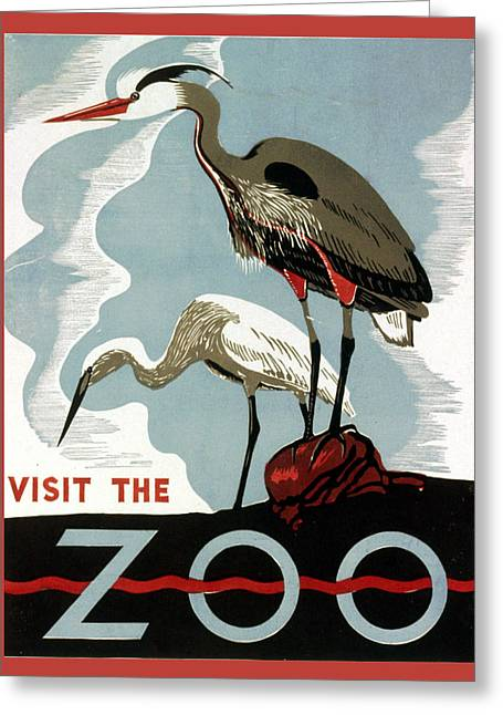 Visit The Zoo Egrets  Greeting Card by Unknow