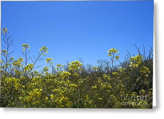 Vista Flores Greeting Card by Jim Thomson