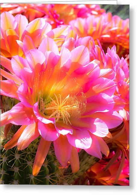 Viva Las Flores Greeting Card by Veronika Countryman