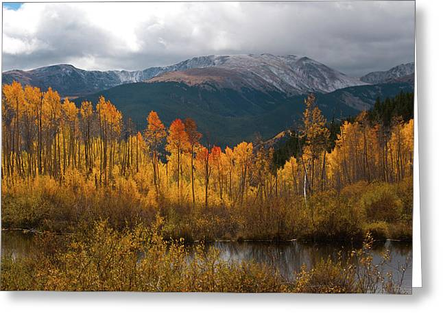 Vivid Autumn Aspen And Mountain Landscape Greeting Card