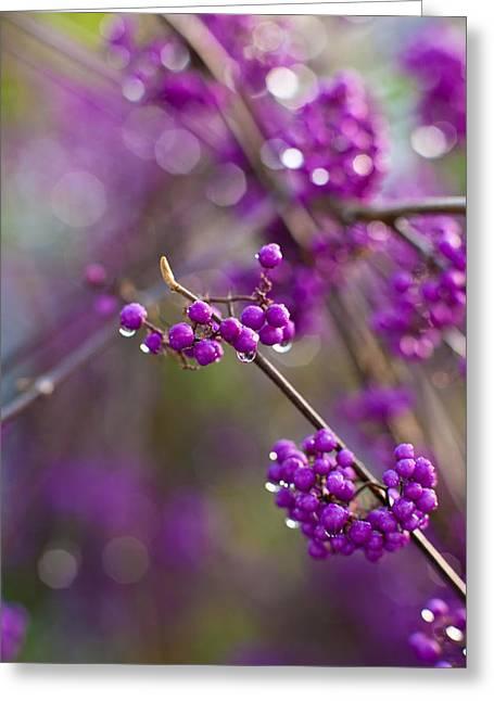 Vivid Beauty Berries Greeting Card by Mike Reid
