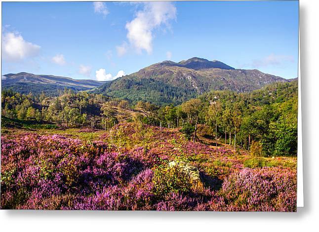 Vivid Glimpses Of Autumn In Trossachs Greeting Card by Jenny Rainbow