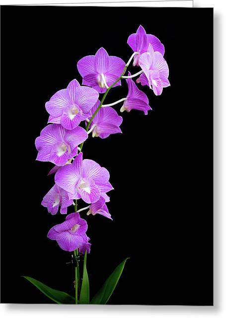 Vivid Purple Orchids Greeting Card