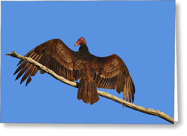 Greeting Card featuring the photograph Vivid Vulture .png by Al Powell Photography USA