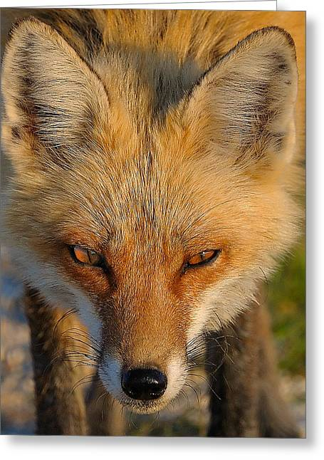 Vixen Greeting Card