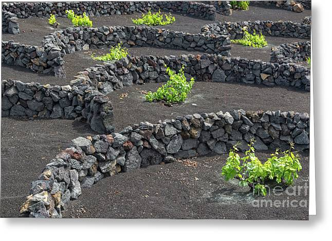 Volcanic Vineyards Greeting Card by Delphimages Photo Creations