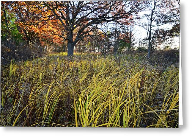 Greeting Card featuring the photograph Volo Bog Fall Morning by Ray Mathis