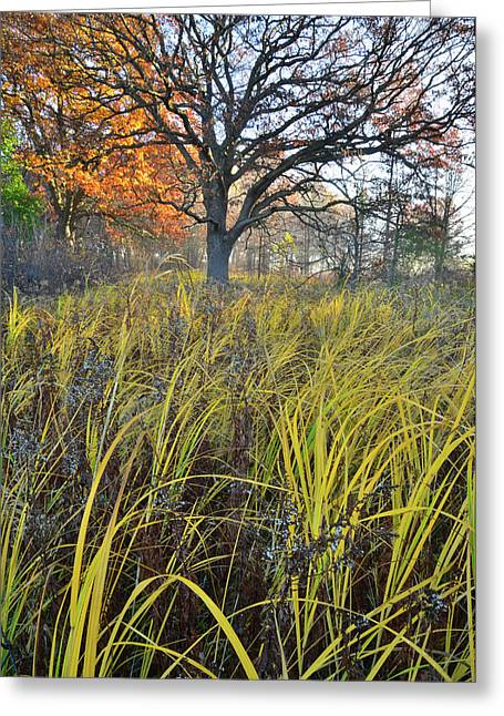 Greeting Card featuring the photograph Volo Bog Natural Area by Ray Mathis