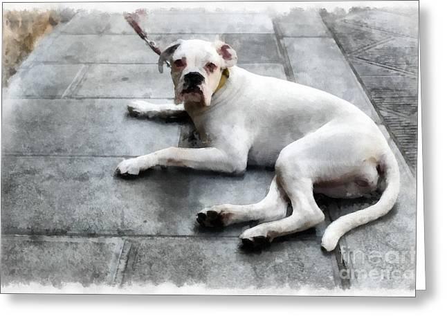 Volterra Italy Dog Greeting Card by Edward Fielding