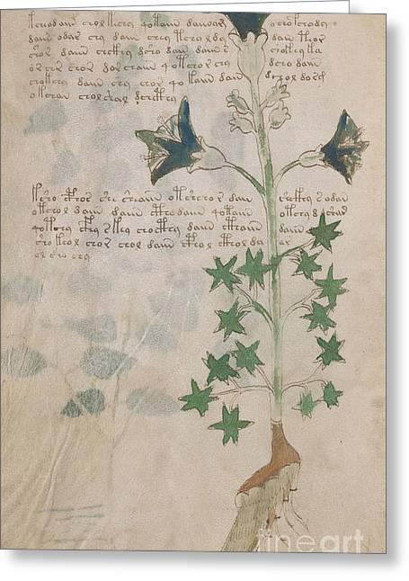 Voynich Flora 03 Greeting Card