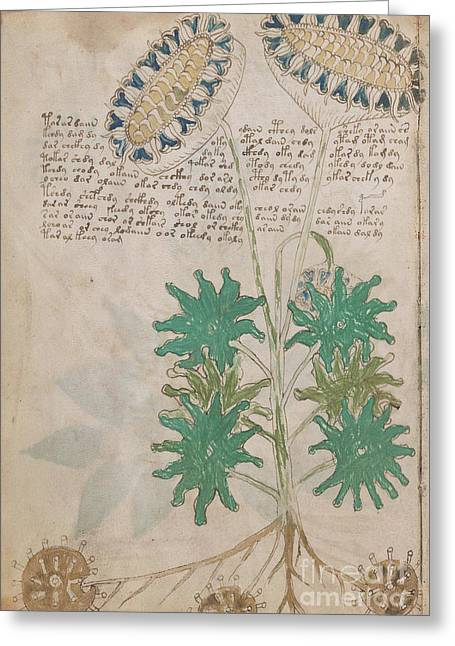 Voynich Flora 04 Greeting Card