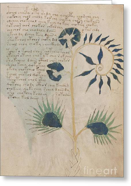 Voynich Flora 12 Greeting Card
