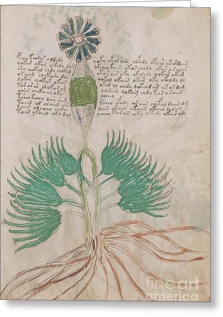 Voynich Flora 16 Greeting Card