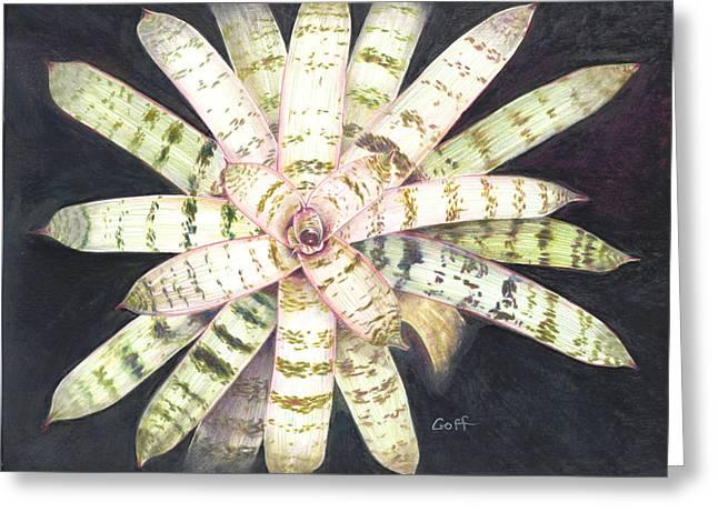 Vriesea 'white Lightning' Greeting Card