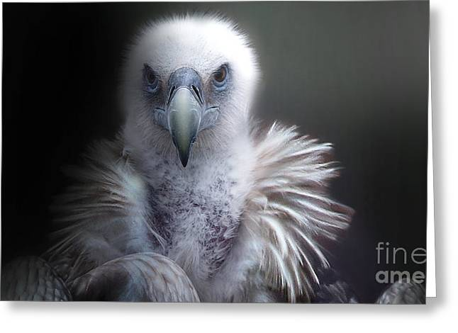 Greeting Card featuring the photograph Vulture 2 by Christine Sponchia
