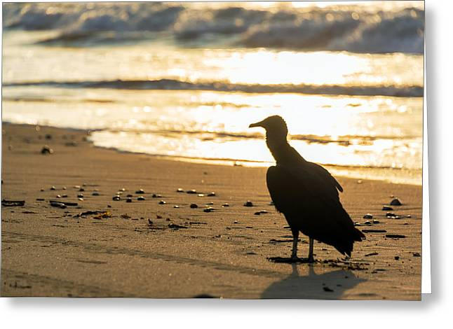 Vulture On A Beach Greeting Card by Jess Kraft