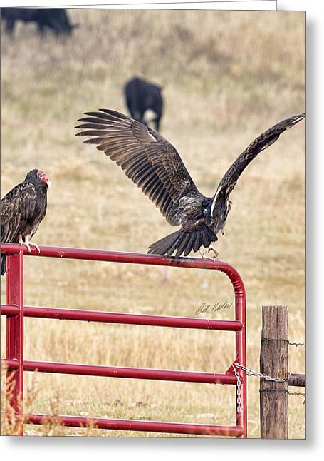 Greeting Card featuring the photograph Vulture Vee by Bill Kesler