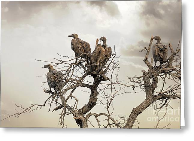 Vultures In A Dead Tree.  Greeting Card by Jane Rix