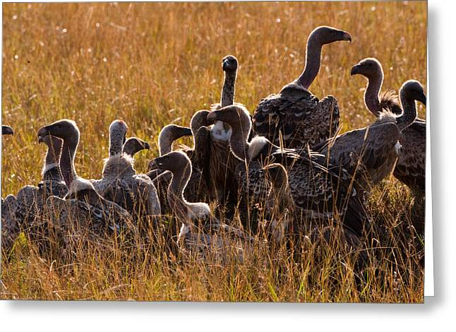 Vultures Greeting Card by Paco Feria