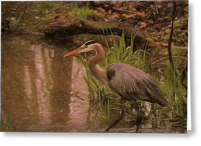 Wading Blue Heron Greeting Card by Dan Sproul