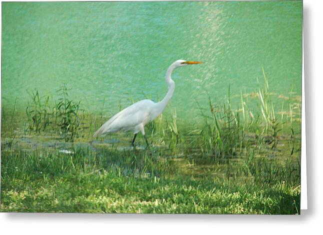 Greeting Card featuring the photograph Wading Egret by Kathleen Stephens