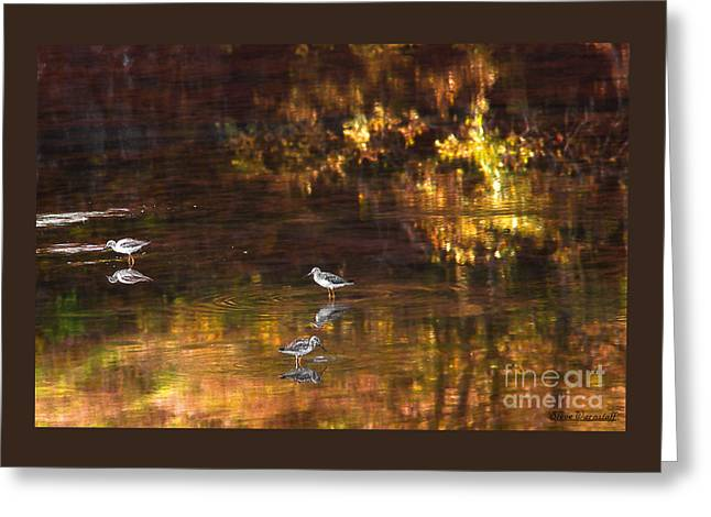 Wading In Light Greeting Card