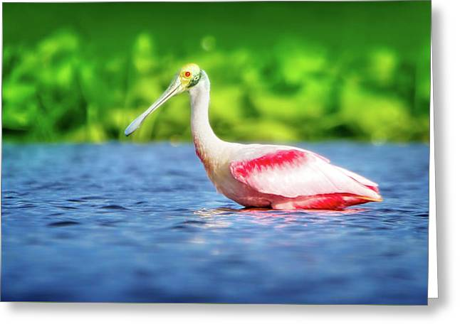 Wading Spoonbill Greeting Card by Mark Andrew Thomas