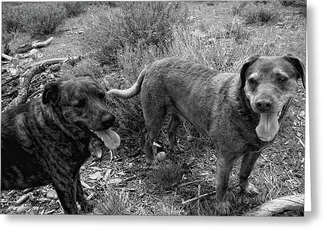 Wagging Tongues Greeting Card by Donna Blackhall