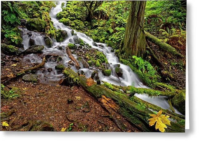Greeting Card featuring the photograph Wahkeena Falls by Jonathan Davison