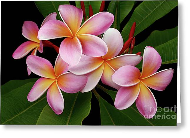 Wailua Sweet Love Texture Greeting Card by Sharon Mau