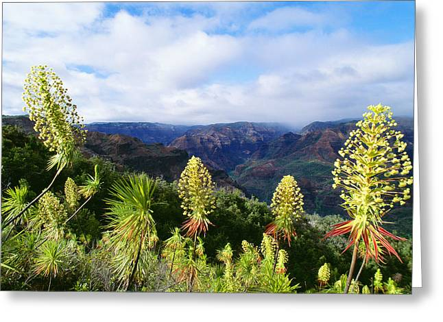 Waimea Valley Greeting Cards - Waimea Canyon Iliau Plant Greeting Card by Greg Vaughn - Printscapes