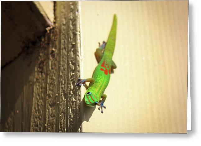 Waimea Gecko Greeting Card