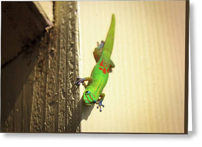 Waimea Gecko Greeting Card