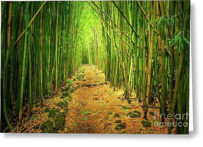 Waimoku Bamboo Forest Greeting Card by Inge Johnsson