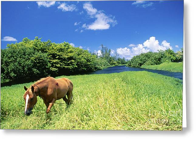 Wainiha Valley Greeting Card by Peter French - Printscapes