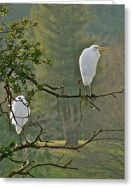 Waiting Egrets Greeting Card