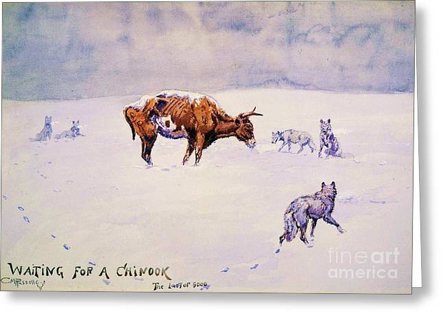 Waiting For A Chinook Greeting Card by Pg Reproductions