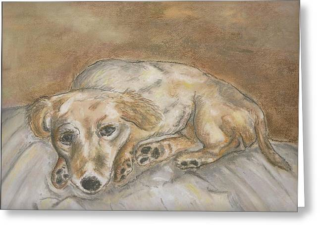 Tired On Bed Greeting Cards - Waiting For a Walk Greeting Card by Jo Anne Kikel