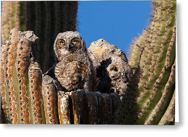 Waiting For Mom Greeting Card by Dennis Eckel