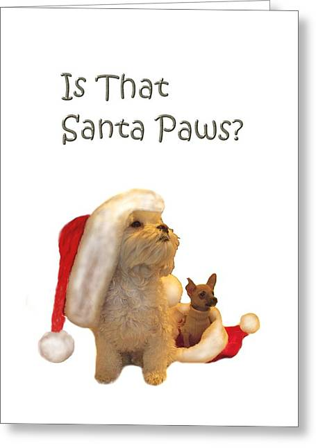Waiting For Santa Paws Greeting Card by Joni McPherson