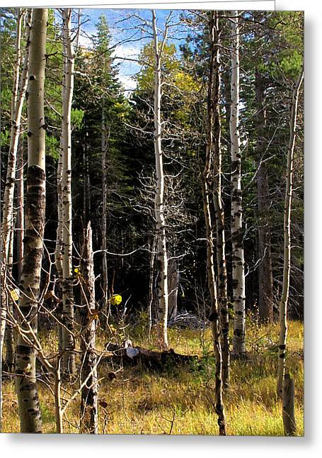 Waiting For Snow Sierra Nevada Autumn Larry Darnell Greeting Card