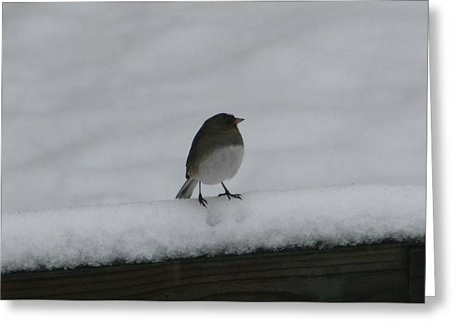 Greeting Card featuring the digital art Waiting For Spring by Barbara S Nickerson