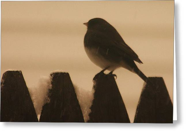 Waiting For Spring Greeting Card by Dennis Curry