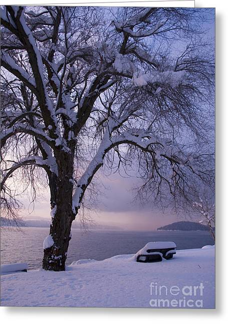 Waiting For Spring Greeting Card by Idaho Scenic Images Linda Lantzy