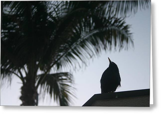 Waiting For Sunrise Greeting Card by Dennis Curry