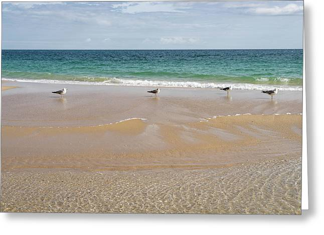 Waiting For The Tide - Layers Textures And Seagulls On Tavira Island Beach Greeting Card by Georgia Mizuleva