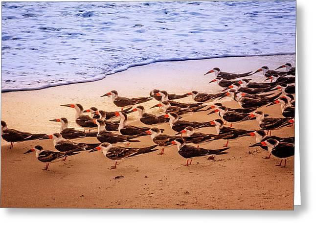 Waiting For The Wave Greeting Card by Debra and Dave Vanderlaan