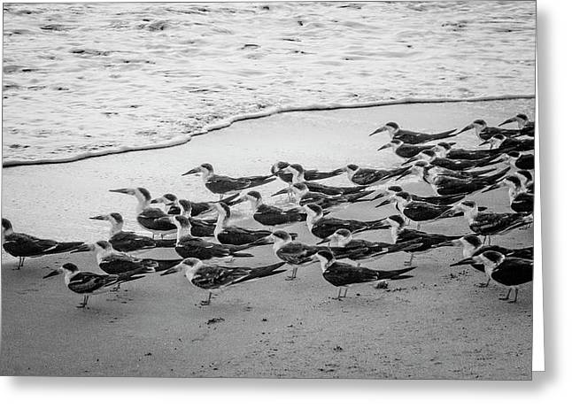 Waiting For The Wave In Black And White Greeting Card by Debra and Dave Vanderlaan