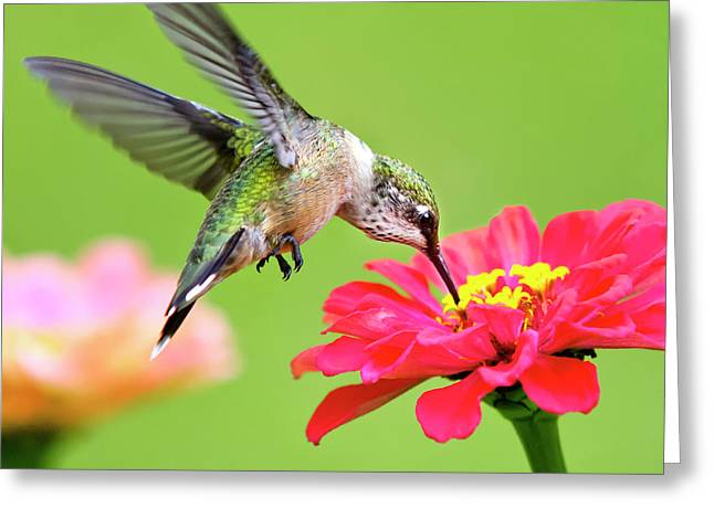 Waiting In The Wings Hummingbird Square Greeting Card